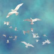 Flock Of Birds 4
